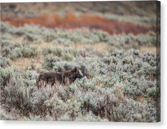 Canvas Print featuring the photograph W30 by Joshua Able's Wildlife