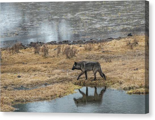 Canvas Print featuring the photograph W53 by Joshua Able's Wildlife