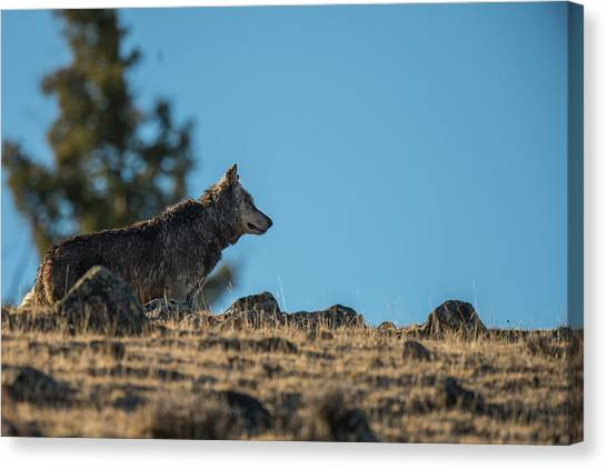 Canvas Print featuring the photograph W61 by Joshua Able's Wildlife