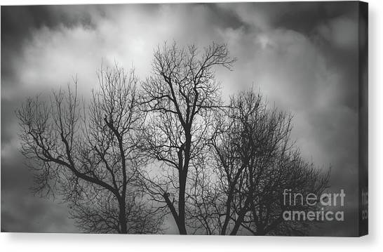 Waiting Bird Canvas Print