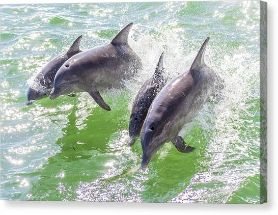 Wake Surfing Dolphin Family Canvas Print