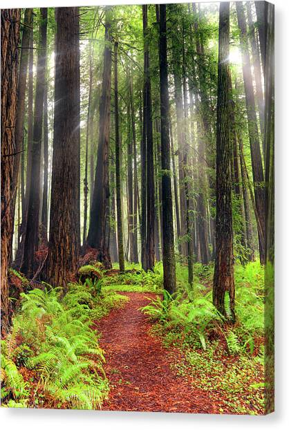 Forest Paths Canvas Print - Walk In The Woods by Leland D Howard