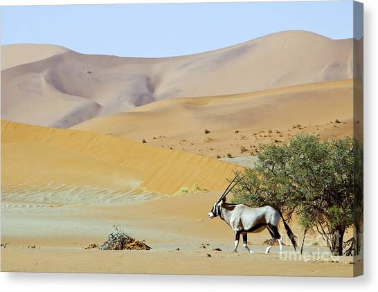 Bush Canvas Print - Wandering Dune Of Sossuvlei In Namibia by Damian Ryszawy