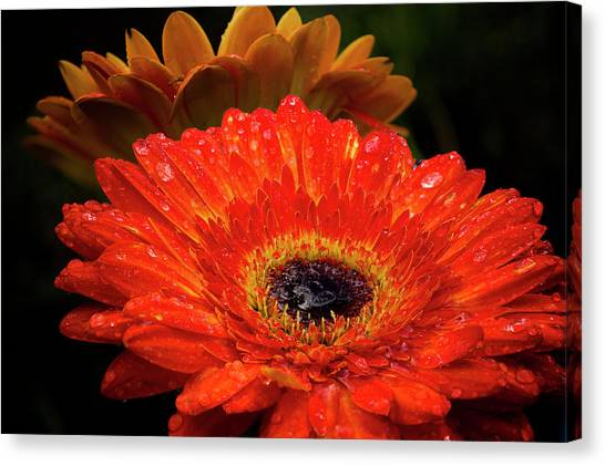 Warm Thoughts Glowing Canvas Print