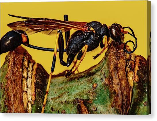 Wasp Just Had Enough Canvas Print