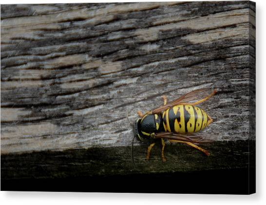 Wasp On Wood Canvas Print