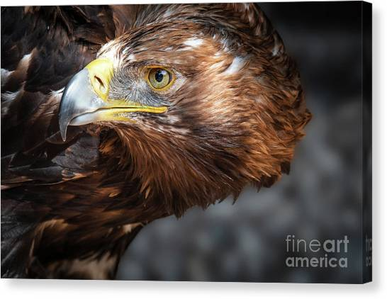 Watching Eagle Canvas Print