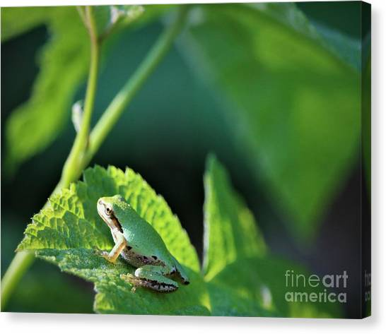 Canvas Print - Watching The Sunrise by Nick Gustafson