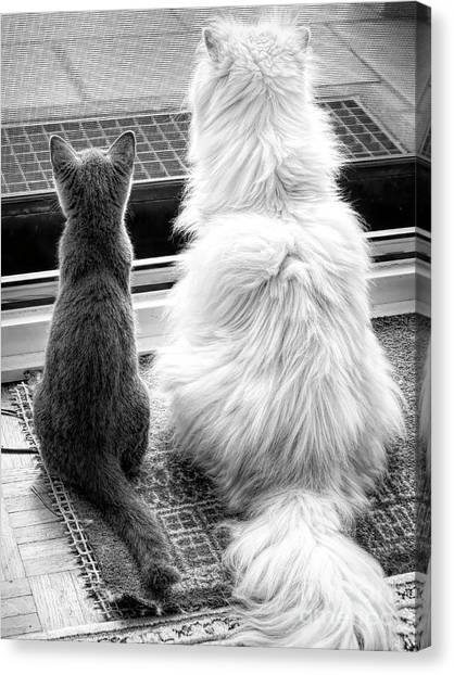 Chartreuxes Canvas Print - Watching The World Go By by Elisabeth Lucas