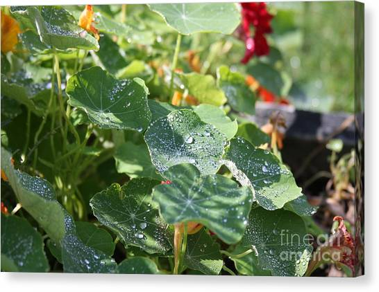 Canvas Print featuring the photograph Water Beads After The Summer Rain by Tatiana Travelways