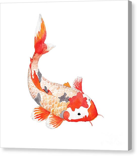 Japanese Gardens Canvas Print - Watercolor Rainbow Carp. Hand Drawn by Eisfrei