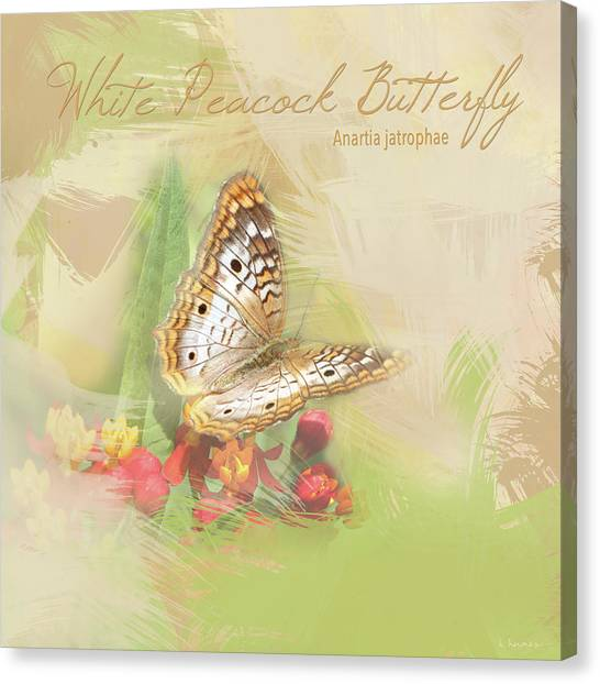 Anartia Jatrophae Canvas Print - Watercolor White Peacock Butterfly by Heidi Hermes