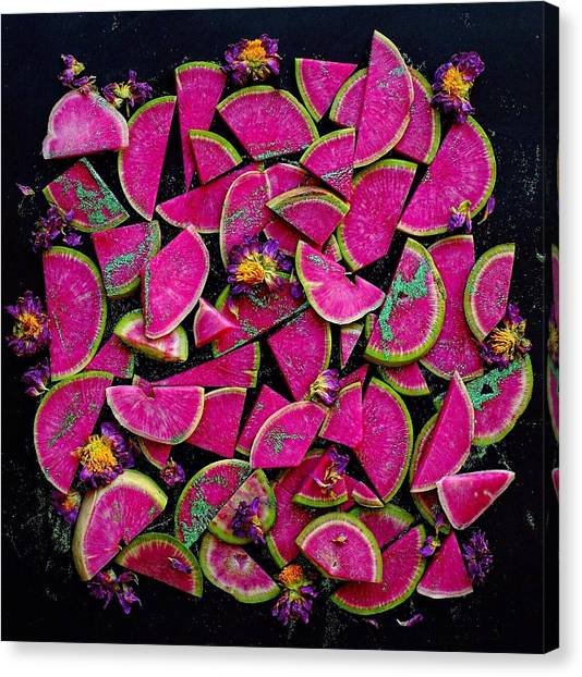 Watermelon Radish Edges Canvas Print