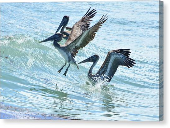 Wave Hopping Pelicans Canvas Print