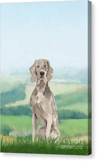 Purebred Canvas Print - Weimaraner by John Edwards