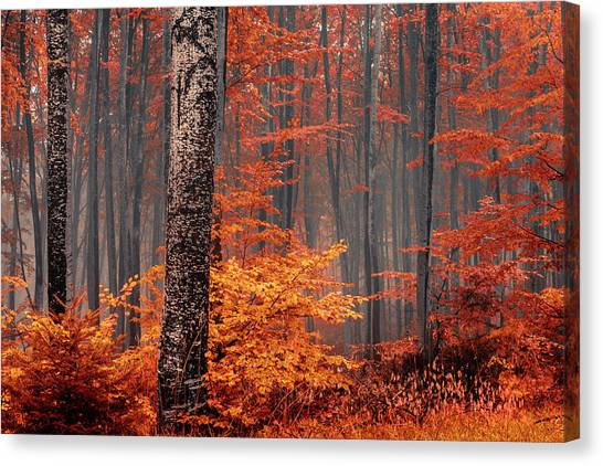 Welcome To Orange Forest Canvas Print