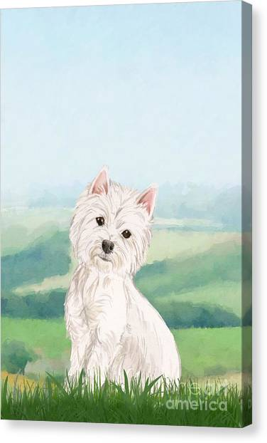 Purebred Canvas Print - West Highland White Terrier by John Edwards