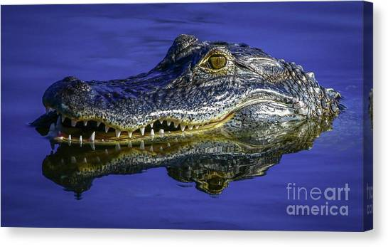 Canvas Print featuring the photograph Wetlands Gator Close-up by Tom Claud