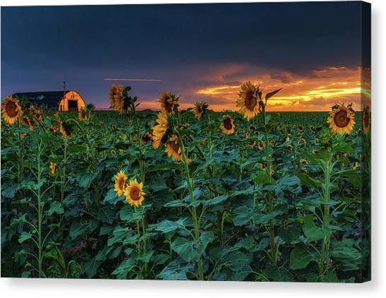 Canvas Print featuring the photograph Whispers Of Summer by John De Bord