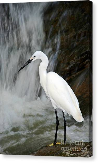 White Bird With Waterfall. Heron In The Canvas Print by Ondrej Prosicky