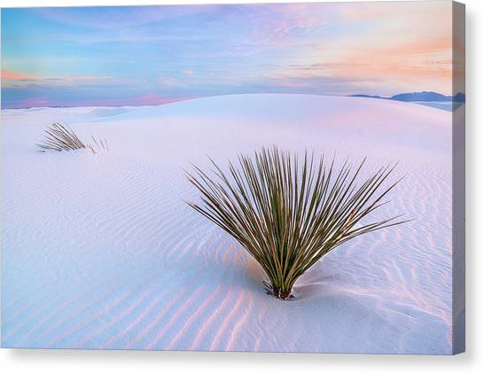 White Dunes, White Sands National Monument Canvas Print