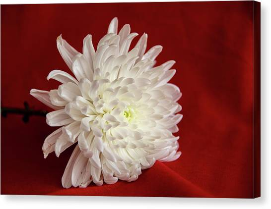 White Flower On Red-1 Canvas Print