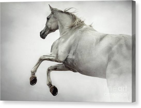 Canvas Print featuring the photograph White Horse Rearing Up by Dimitar Hristov