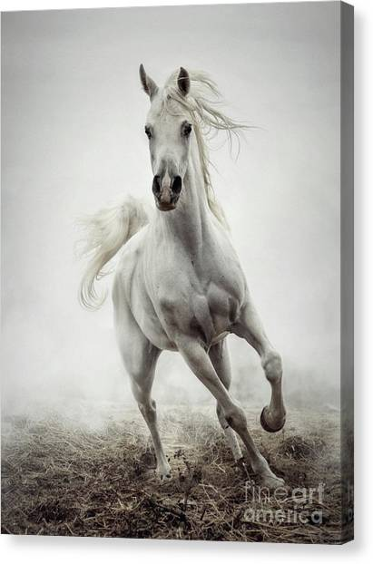 Canvas Print featuring the photograph White Horse Running In Winter Mist by Dimitar Hristov