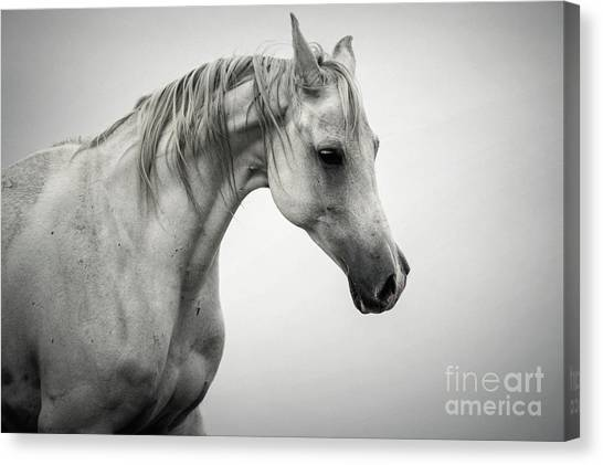Canvas Print featuring the photograph White Horse Winter Mist Portrait by Dimitar Hristov