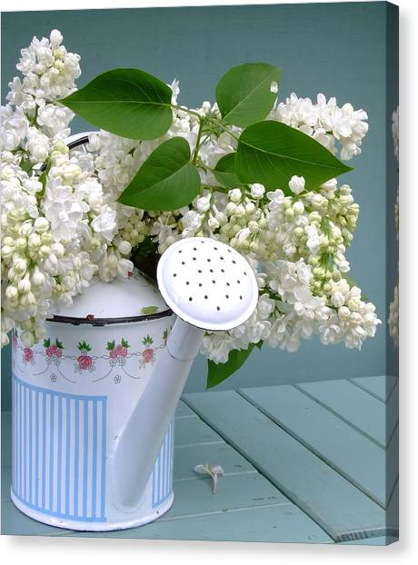 Lilac Bush Canvas Print - White Lilacs In A Can by Atwag