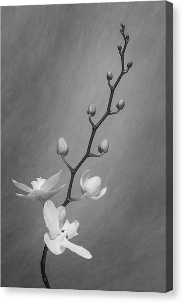 Nature Still Life Canvas Print - White Orchid Buds by Tom Mc Nemar