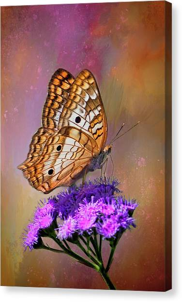 Anartia Jatrophae Canvas Print - White Peacock Butterfly by HH Photography of Florida
