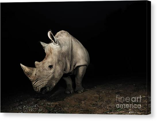 Bush Canvas Print - White Rhinoceros by Signature Message