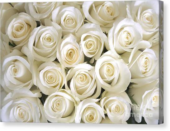 Wedding Bouquet Canvas Print - White Roses Background by Ev Thomas