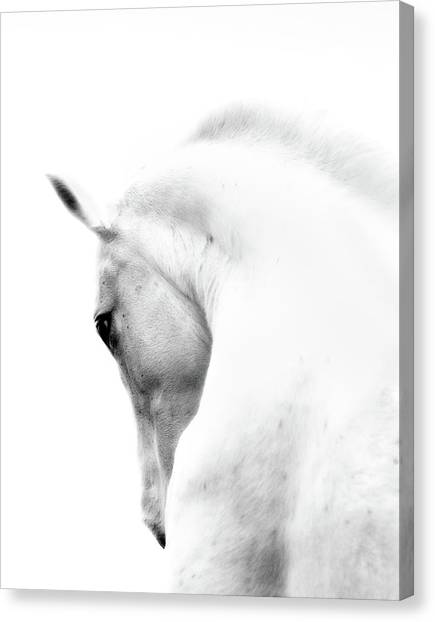 White Stallion Andalusian Horse Neck Canvas Print by 66north