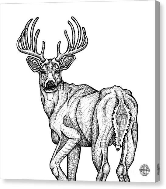 White Tailed Buck Canvas Print