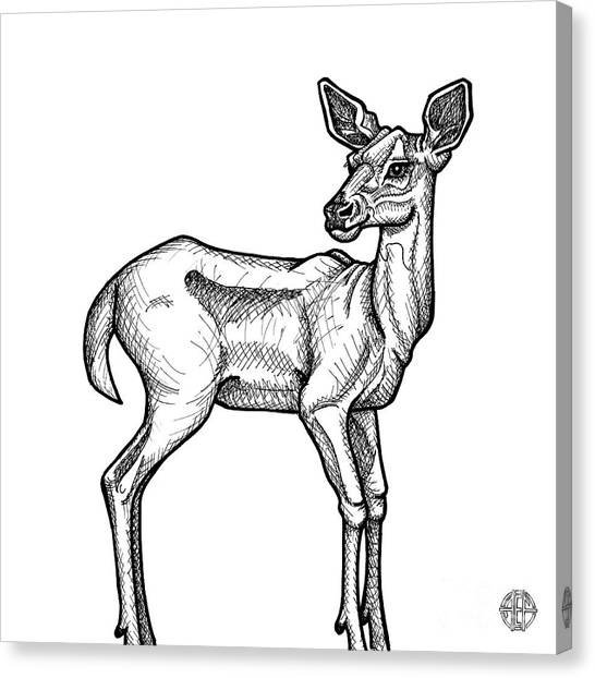White Tailed Doe Canvas Print