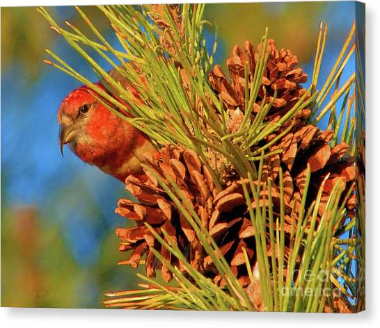 White-winged Crossbill Canvas Print