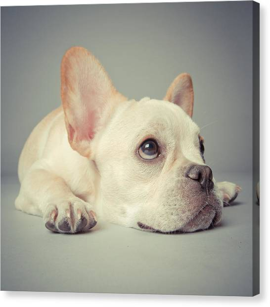 Petter Canvas Print - Why So Glum by Square Dog Photography 6d8ccc73defc