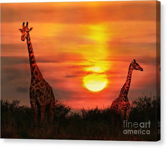 Bush Canvas Print - Wild Giraffes In The Savannah At Sunset by Byelikova Oksana