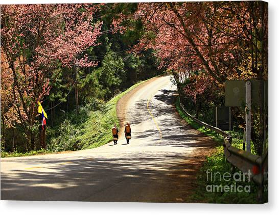 Wild Himalayan Cherry Landscape In Doi Canvas Print by Kosin Sukhum
