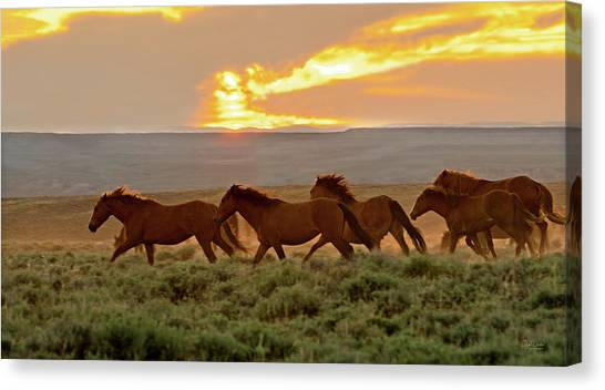 Wild Horses At Dusk Canvas Print