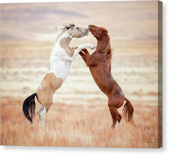 Wild Horses Couldn't Drag Me Away Canvas Print