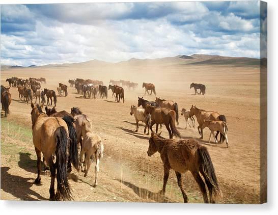 Gobi Canvas Print - Wild Horses In Bayangobi Desert by Jane Sweeney