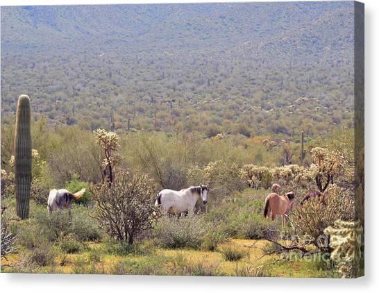 Canvas Print - Wild Horses Salt River Arizona by Marilyn Smith