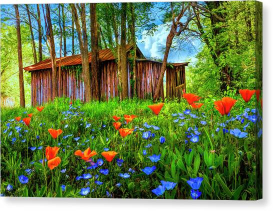 Poppys Canvas Print - Wildflowers In The Country by Debra and Dave Vanderlaan