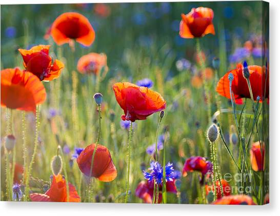 Wildflowers Poppies Canvas Print by Mike Mareen
