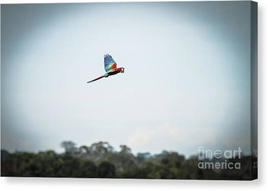 Macaw Canvas Print - Wildlife Of Tambopata, Madre De Dios by Christian Declercq