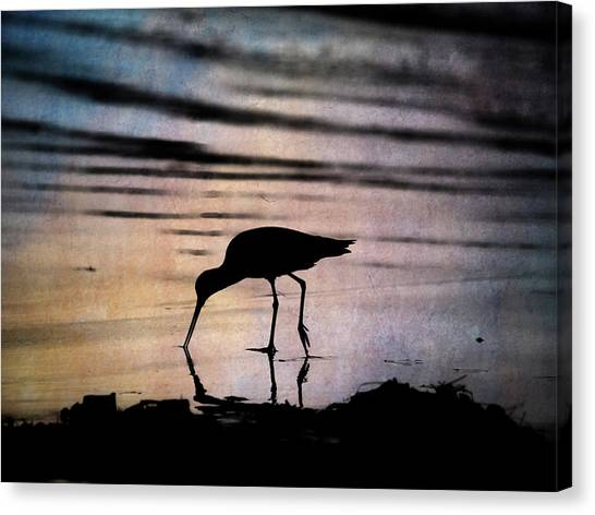 Canvas Print featuring the photograph Willet At Sunset by John Rodrigues