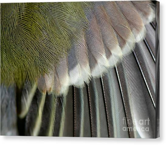 Beauty Canvas Print - Wing Of The Great Tit Close Up by Mycteria